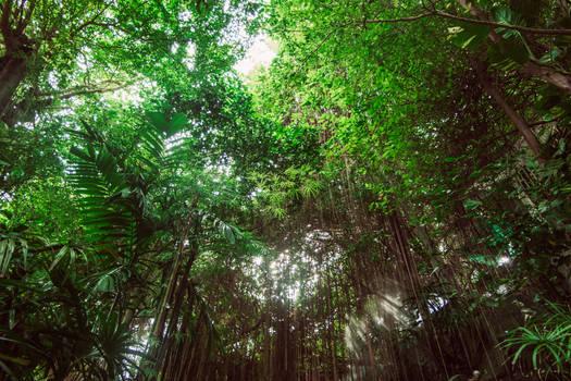 In the Jungle.
