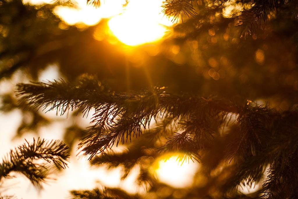 Sunflare by konstantingl