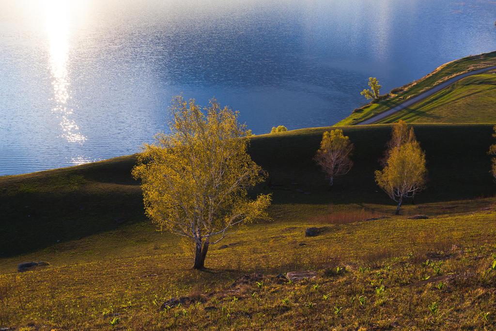 Birch on the hill by konstantingl