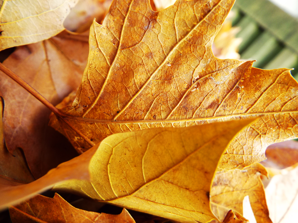 Fallen Leaf by GoodGirl-BadGirl