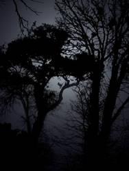 Darkness Creeps