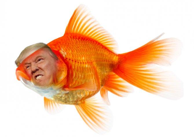 Donald fish by Mrbacon360