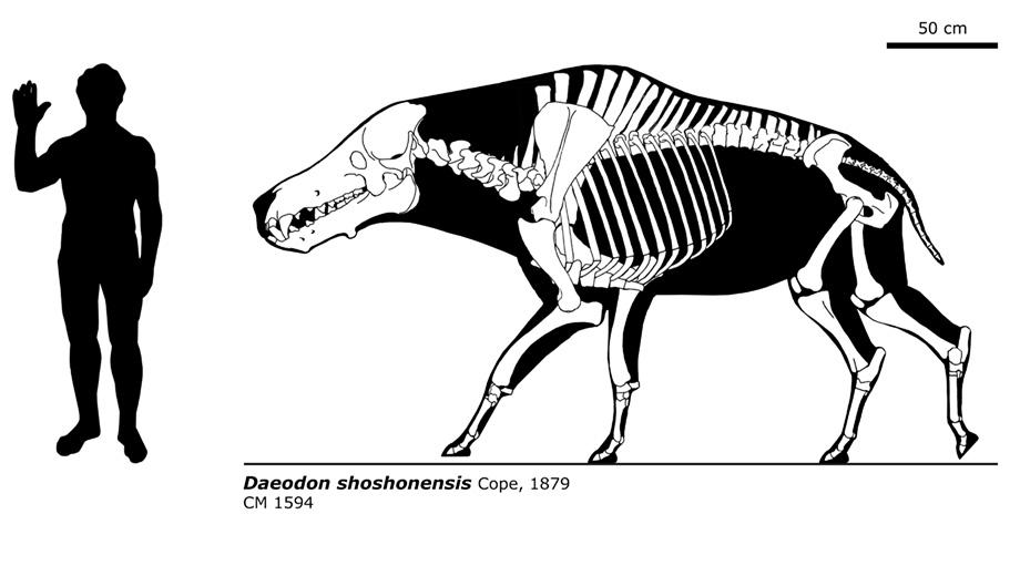 Daeodon shoshonensis by bLAZZE92