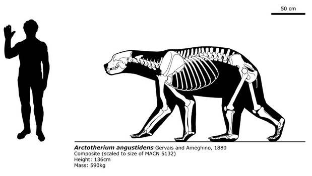 Arctotherium angustidens