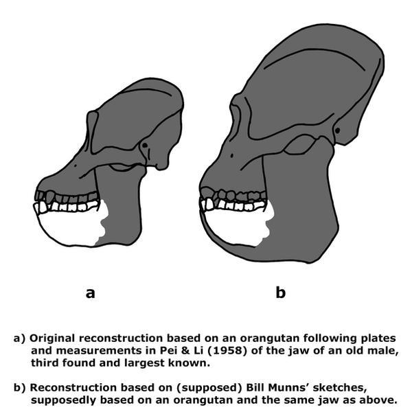 Asiatic Black Bear v Gigantopithecus blacki | The World of