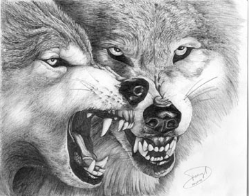 Pencil Wolf Drawing by...