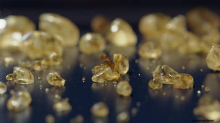Ant on Cane Sugar