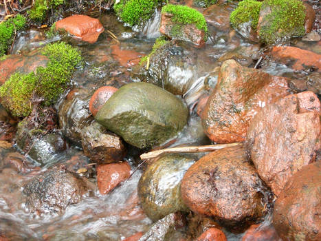 Artiesian Spring Wet Rocks