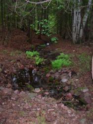 Artesian Spring and Ferns