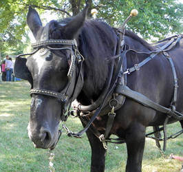 Sorghum Horse