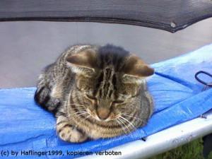 Haflinger1999's Profile Picture