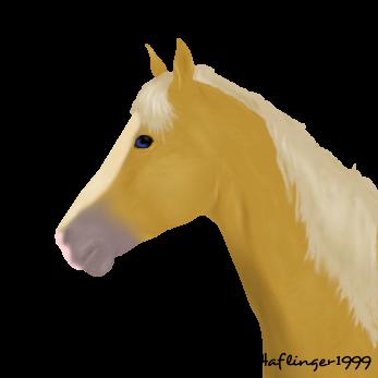 Horse portrait by Haflinger1999