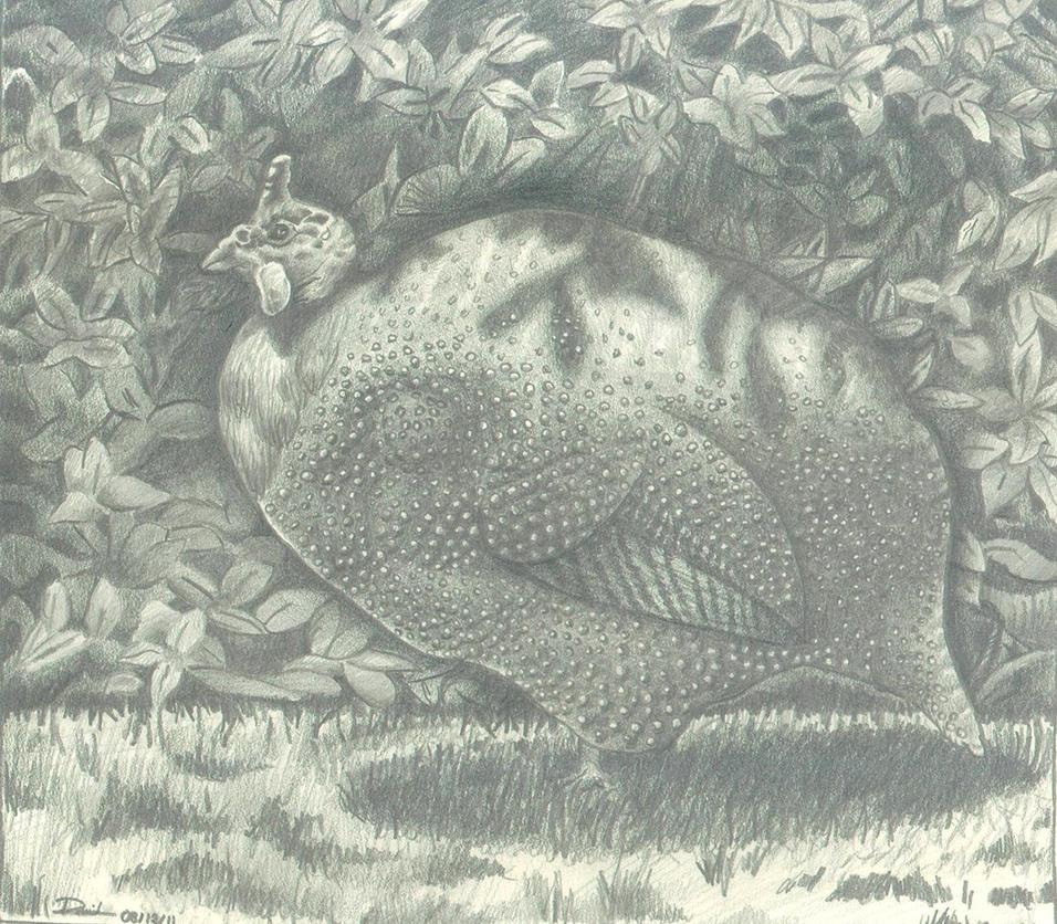 Guinea Hen by Mancuspia