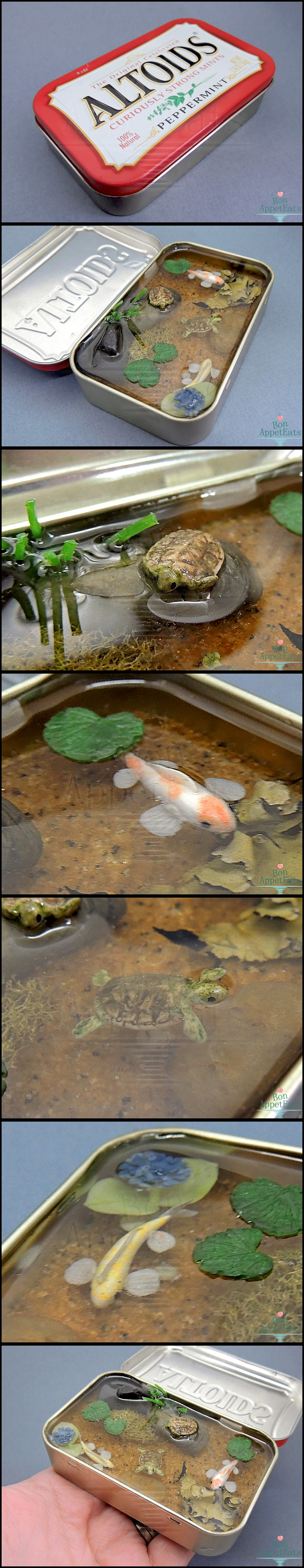 For sale miniature koi and turtle altoids pond by bon for Koi pond plants for sale