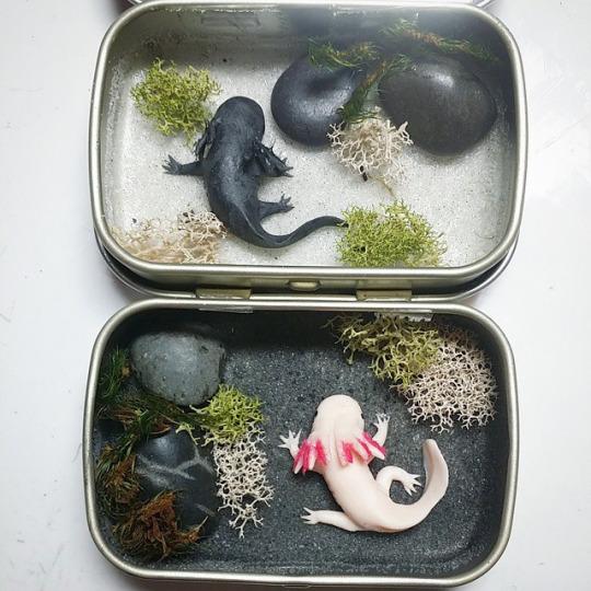 Wip mini axolotl tin ponds by bon appeteats on deviantart for Miniature koi fish
