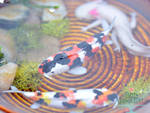 Miniature Koi and Axolotl Pond Closeup