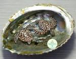 Gift - Sea Turtle Pond
