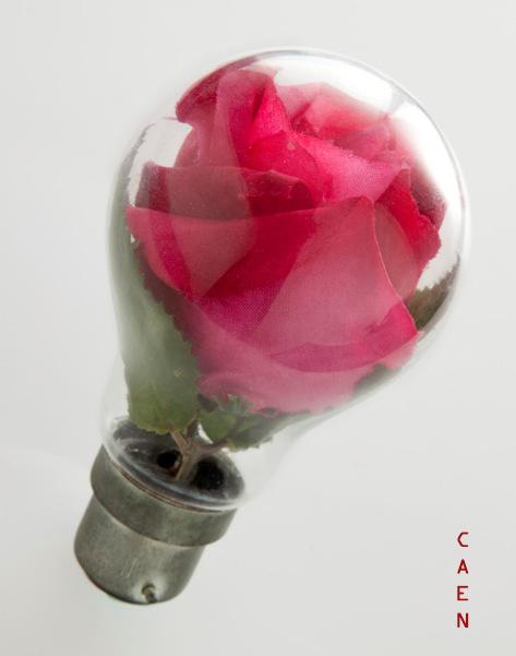 Rose Idea I by Caen-N