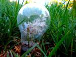 Dandelion Idea