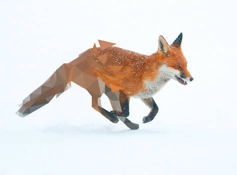 Fox Broken Low Poly