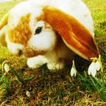 Webkinz Lop Bunny