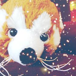 Webkinz Red Panda