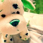 x Clover Puppy x