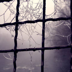 ice cobweb by RainyAndButterfly