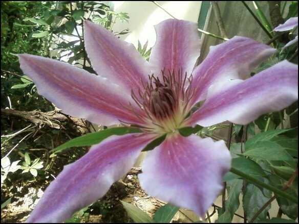 purple flower... by Ulqiourrafangirl