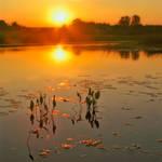 One summer sunrise by Kalechenkov