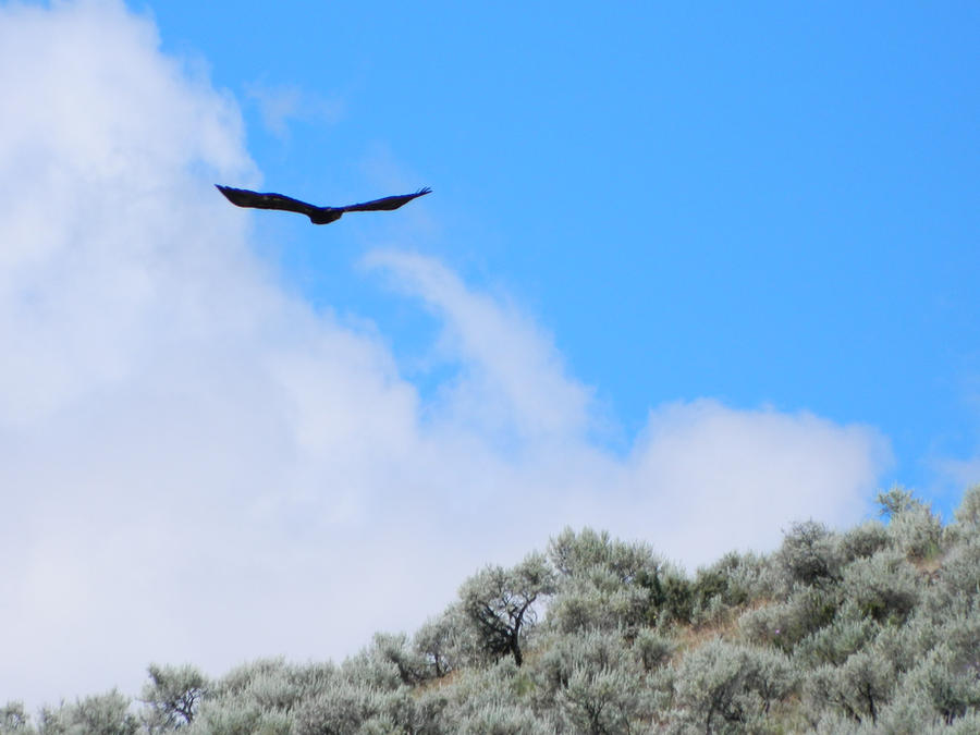 Eagle In The Sky By Poncho 6668