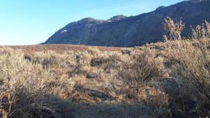 Sage brush mountain view