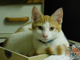My New Kitten