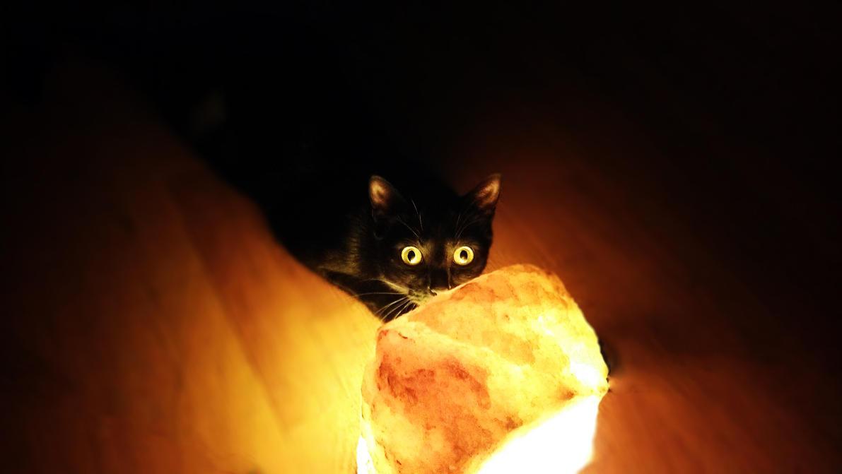 Mycat by sibercat