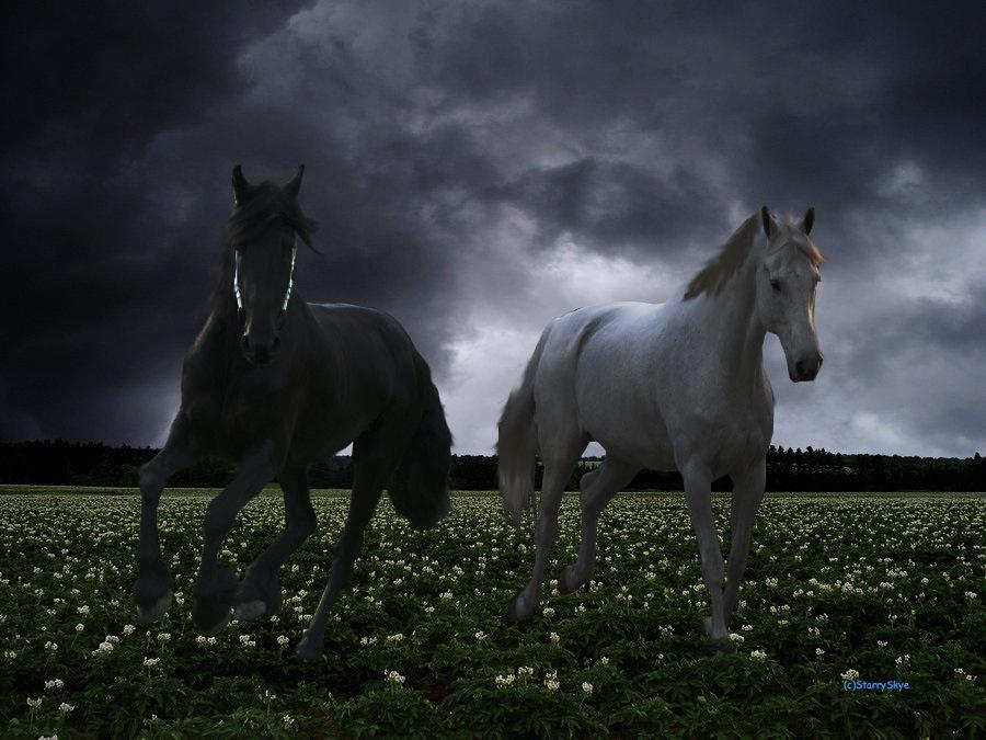 Running Horses Black And White
