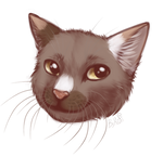 Sketch headshot cat   by KrafiCat