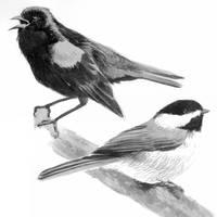 Birds by edwardbatkins