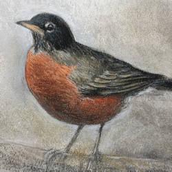 Robin by edwardbatkins