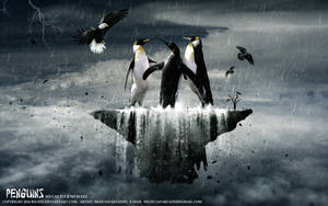 Penguins by belief2