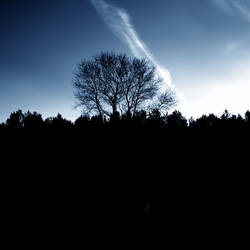 Disquiet Lightness (The Fall)