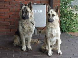 .Pretty dogs. by DelinquentDog