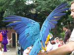 .Macaw wings 1. 0864