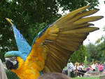 .Macaw wings 4. 1133