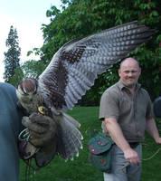 .Falcon wings 2. 7000