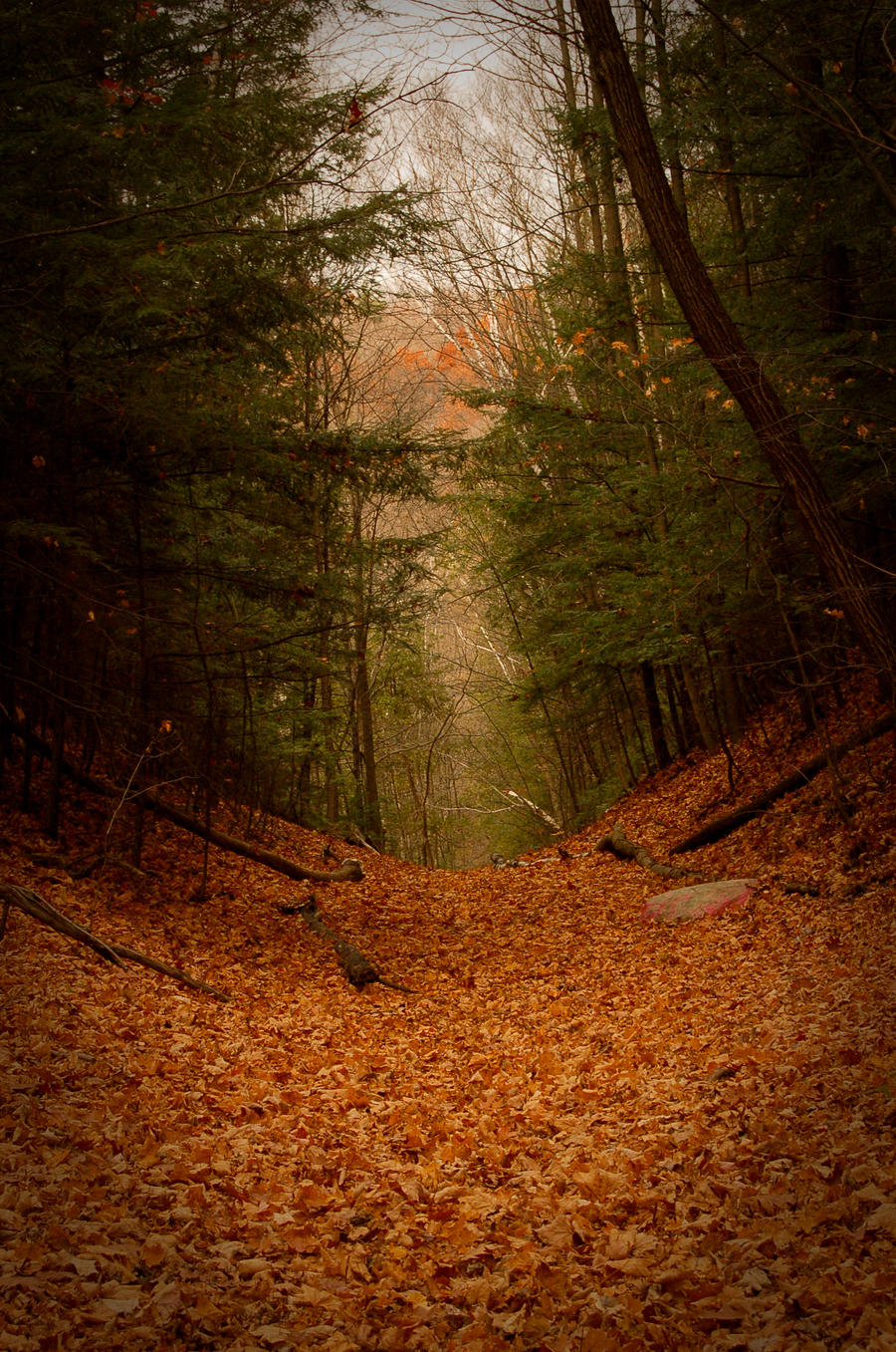 autumn woods p.ii IV by drag-my-soul