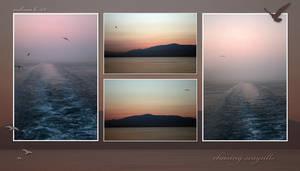 chasing seagulls..
