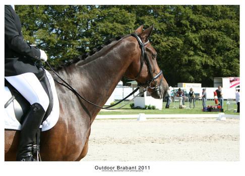 Outdoor Brabant VI
