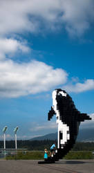 Digital Orca by paconavarro
