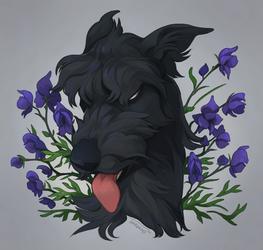 Canis Lupus Napellus