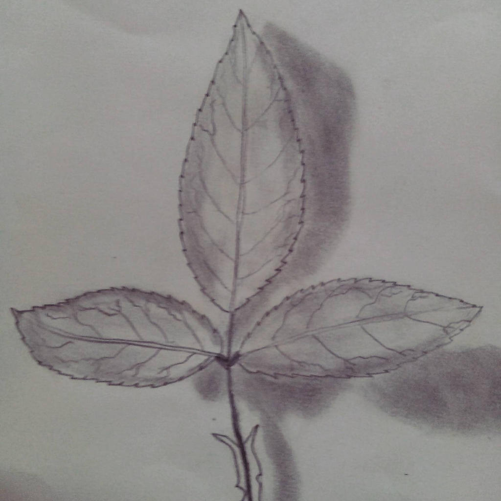 leaves  by dimasdwipramono